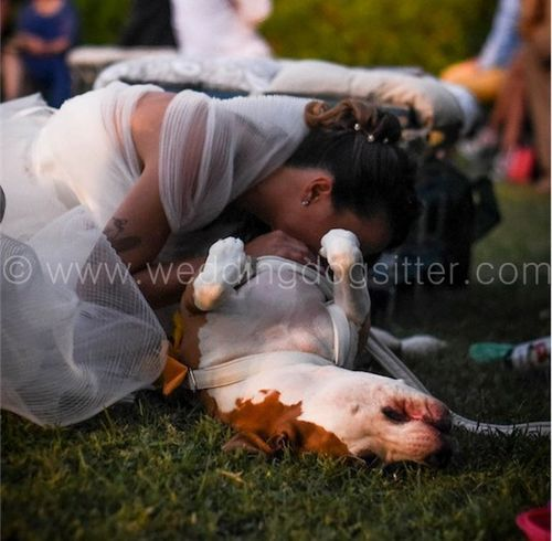 wedding dog sitter 02